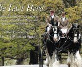 Shire horses of Richmond Park