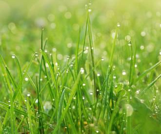 Dew gathering article in Living In Richmond, Kew & East Twickenham